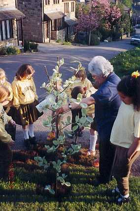 Brownies planting the whitebeam tree