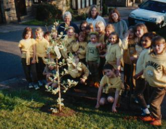 Brownies planting the tree